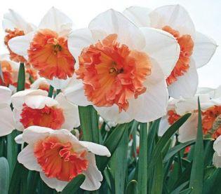 a393b25a8bd7c8a827d3e4fd8b774294--exotic-flowers-amazing-flowers